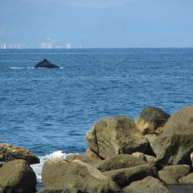 Costa Sur Resort & Spa — Whales spotted off the shore