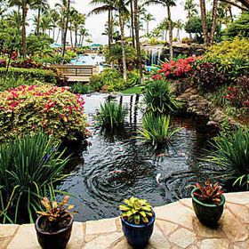 Marriott's Maui Ocean Club Koi Pond
