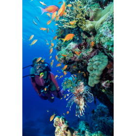 Coral Princess Club — - Scuba diving